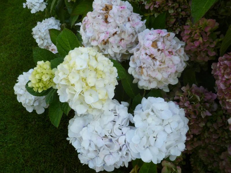floraisons d'octobre - Page 5 00533