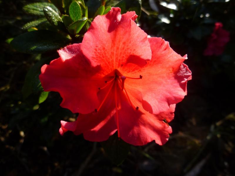 floraisons d'octobre - Page 5 00620