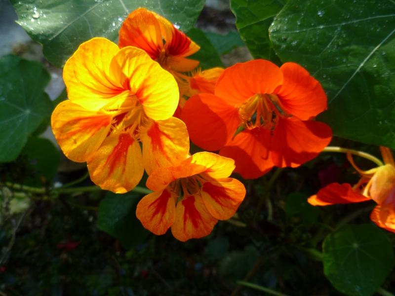 floraisons d'octobre - Page 5 00720