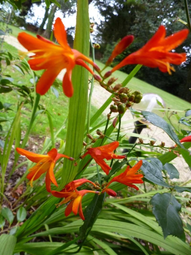 Floraisons du mois de septembre - Page 2 00914