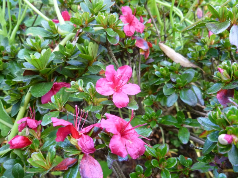 floraisons d'octobre - Page 5 00915