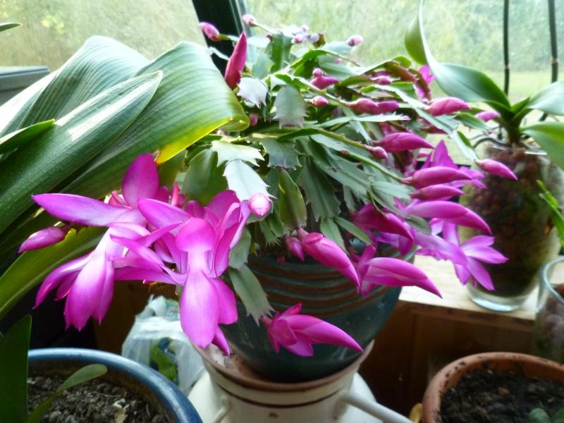 Floraisons d'intérieur  00916
