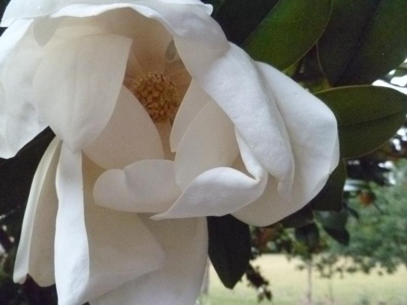 Floraisons du mois de juillet 01012