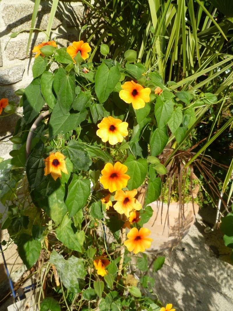 floraisons d'octobre - Page 5 01116