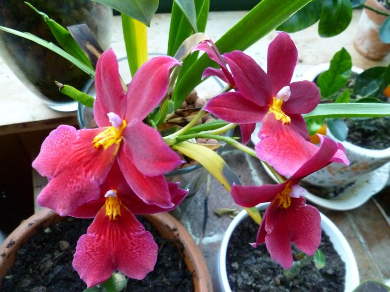 Floraisons d'intérieur  01217