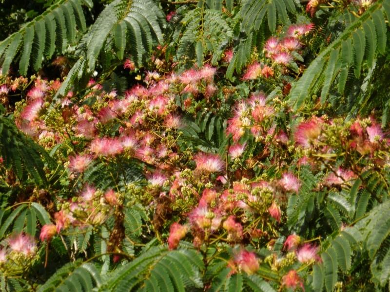 Floraisons du mois de septembre 01314