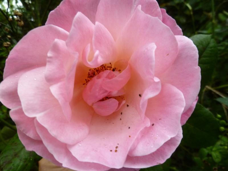 Floraisons du mois de septembre - Page 2 01315