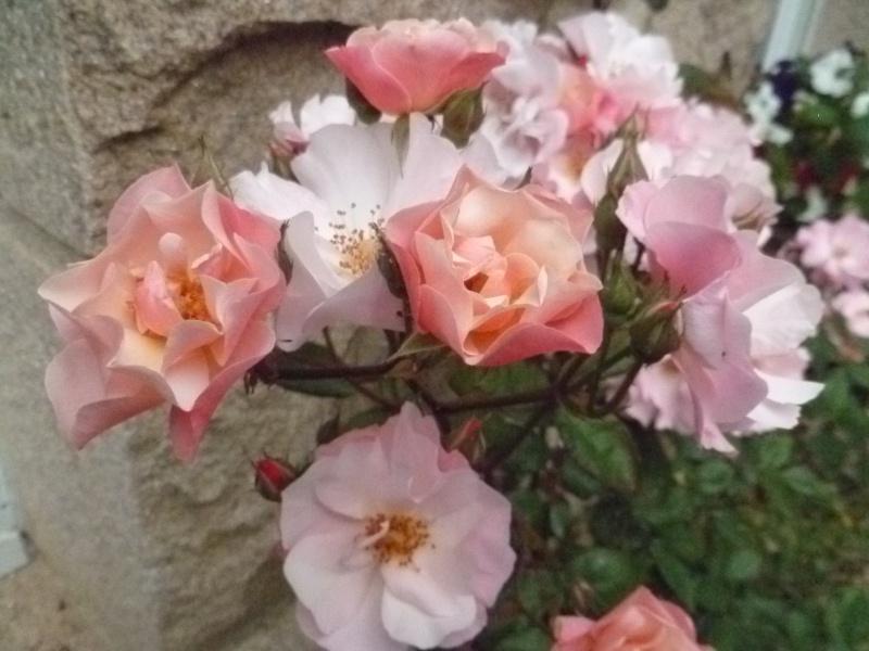 Floraisons du mois de juillet 01411