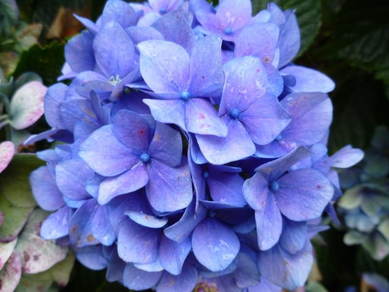 Floraisons du mois de septembre - Page 2 01417