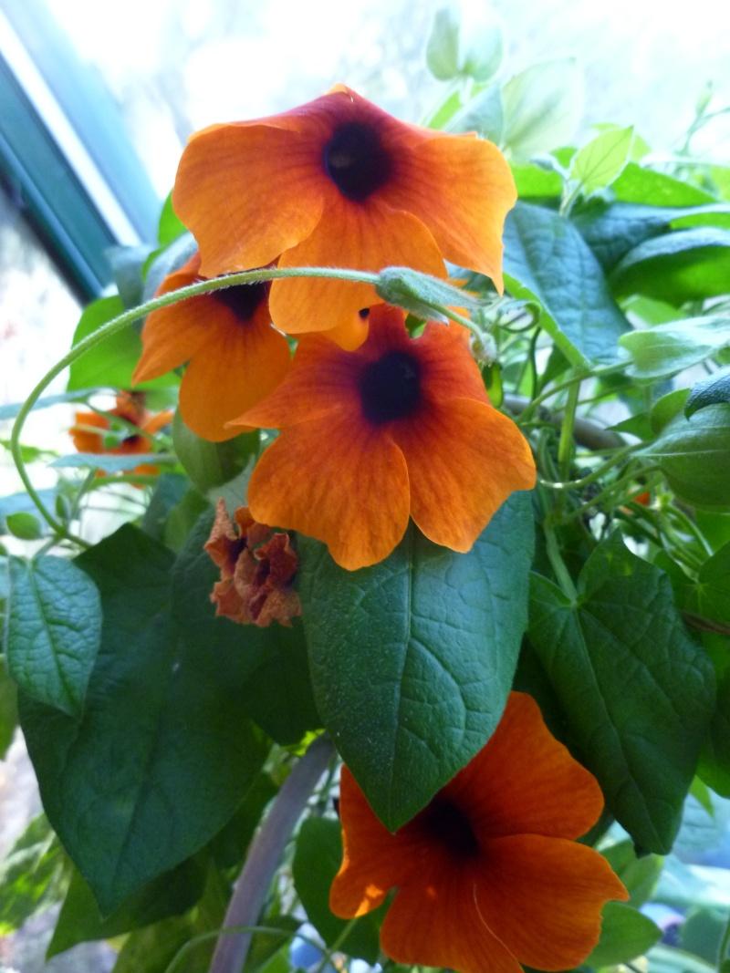 Floraisons d'intérieur  01418