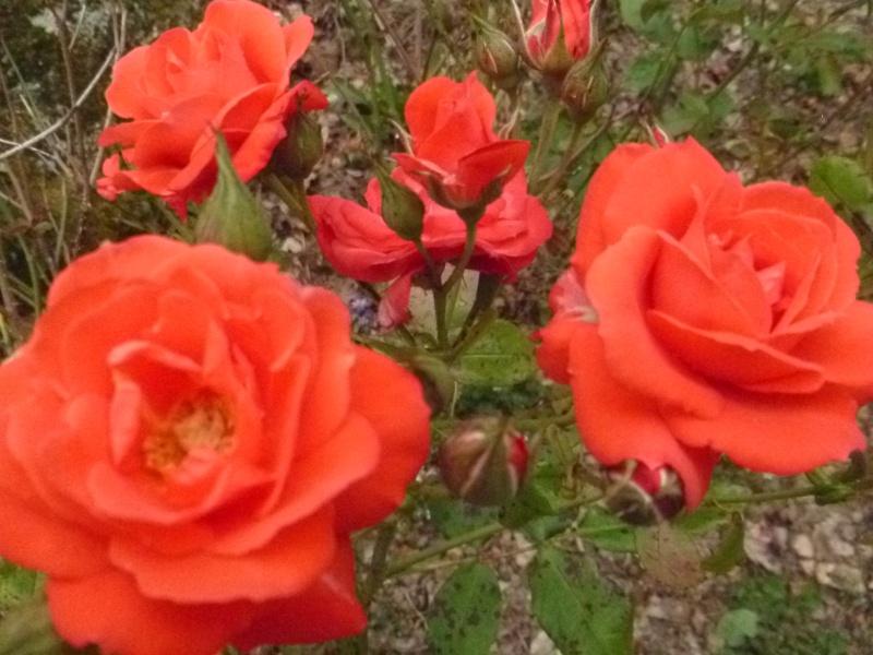 Floraisons du mois de juillet 01611