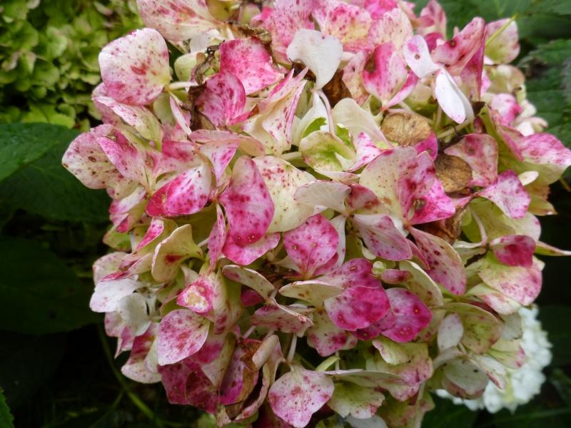 Floraisons du mois de septembre - Page 2 01616