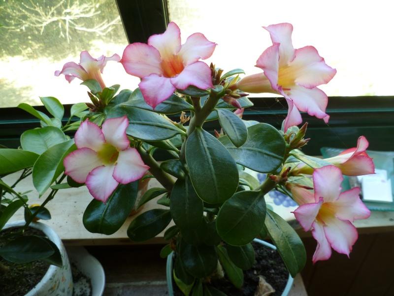 Floraisons du mois de juillet 01712