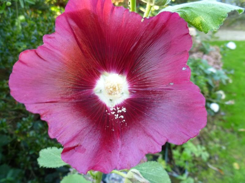 floraisons d'octobre - Page 5 01718