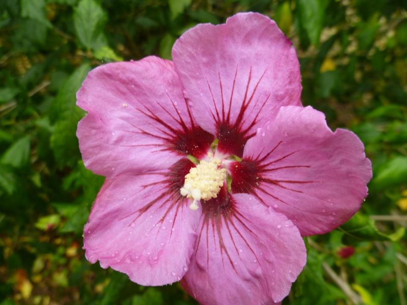 Floraisons du mois de septembre - Page 2 01812