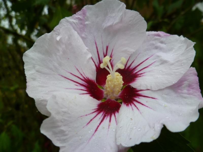 Floraisons du mois de septembre - Page 2 01912
