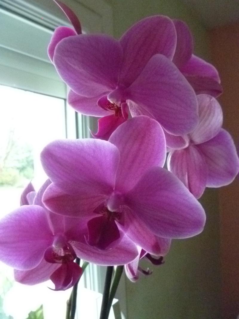 Floraisons du mois de juillet 02112