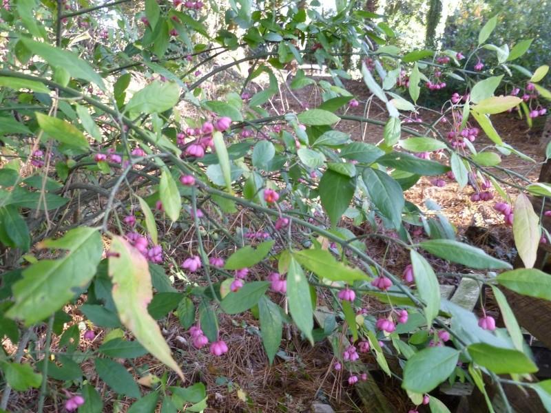 floraisons d'octobre - Page 5 02212