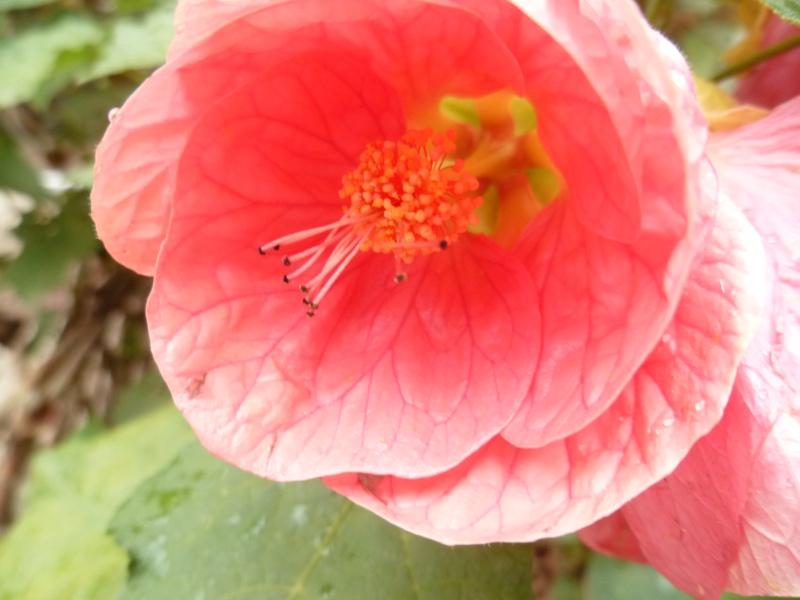 Floraisons du mois de septembre - Page 2 02510