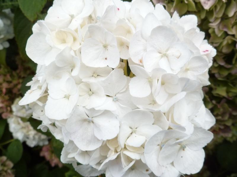 Floraisons du mois de septembre - Page 2 02812
