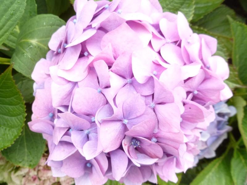 Floraisons du mois de septembre - Page 2 02911