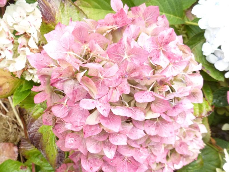 Floraisons du mois de septembre - Page 2 03012