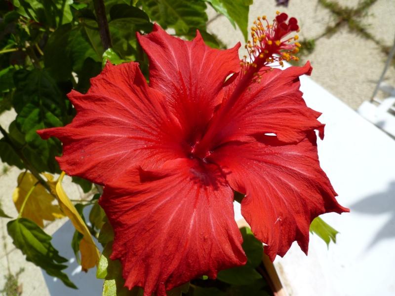 Floraisons du mois de septembre - Page 2 03110