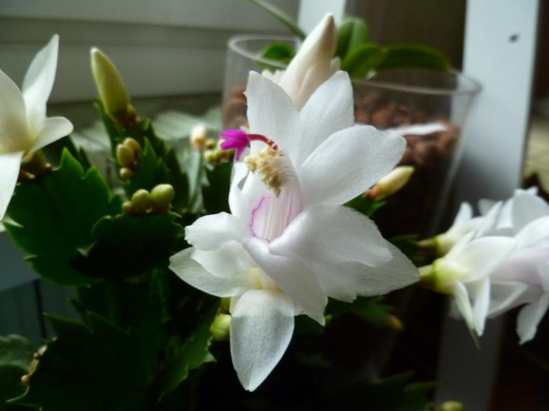 Floraisons d'intérieur  03612