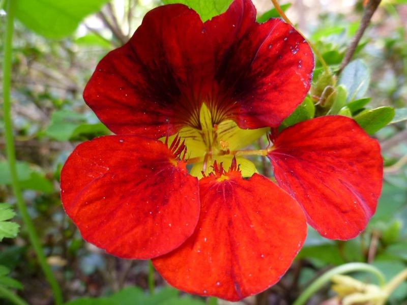 Floraisons du mois de septembre - Page 2 03712