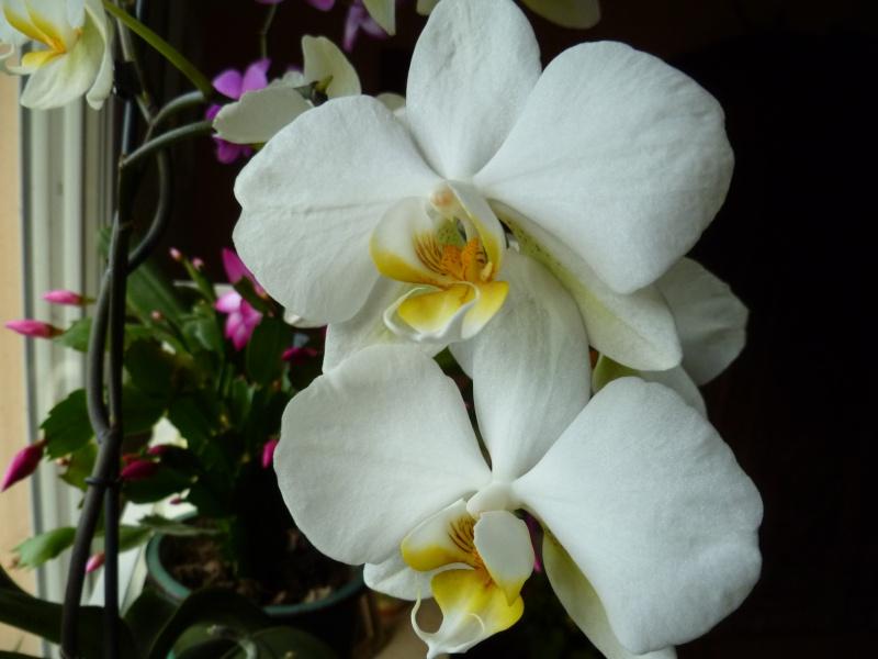 Floraisons d'intérieur  03714