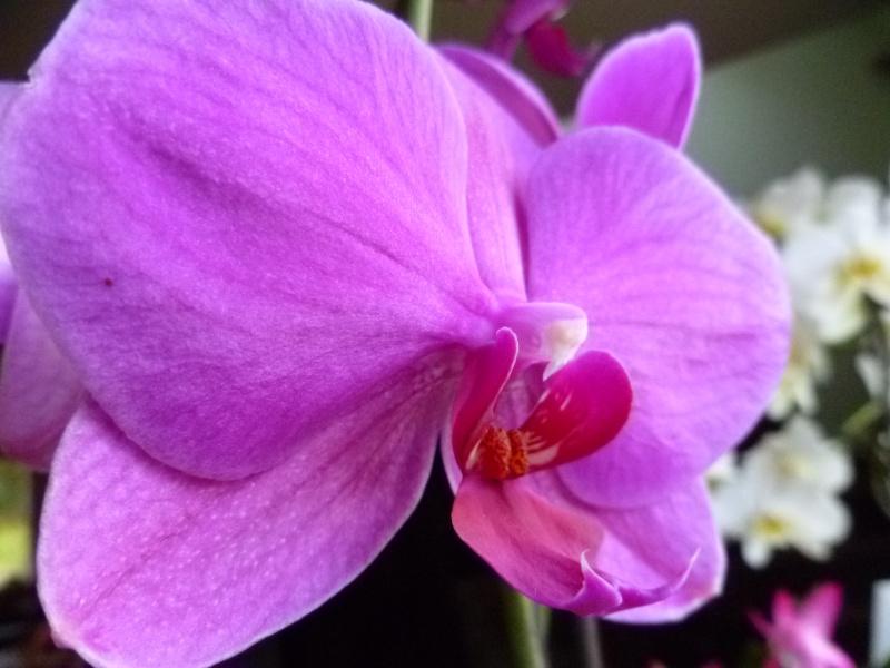Floraisons d'intérieur  03812