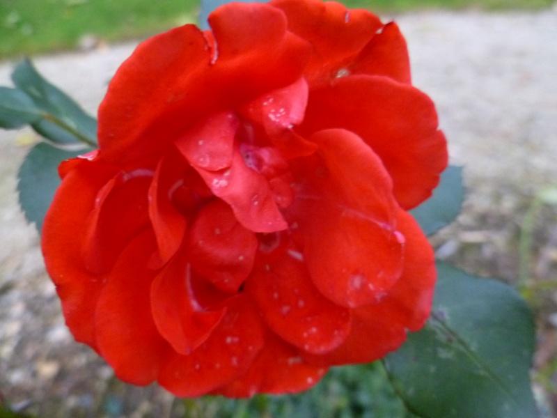 floraisons d'octobre - Page 5 04511