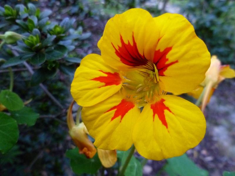 floraisons d'octobre - Page 5 04712