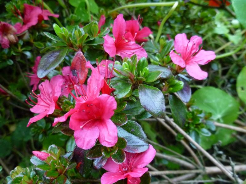 floraisons d'octobre - Page 5 04810