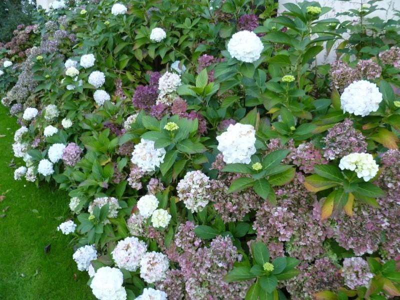 floraisons d'octobre - Page 5 05311