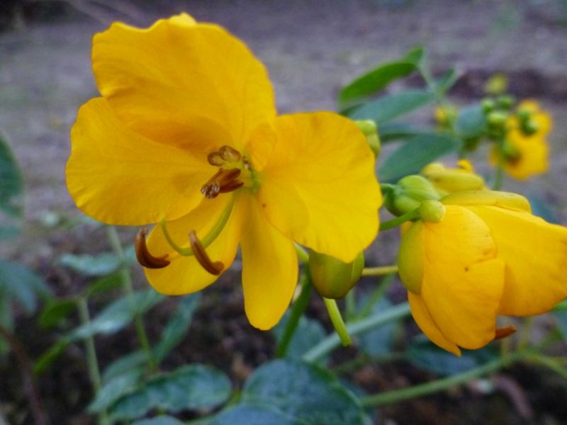 floraisons d'octobre - Page 5 05410