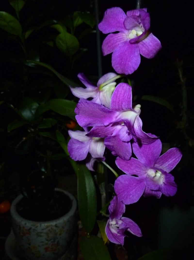 Floraisons d'intérieur  06110
