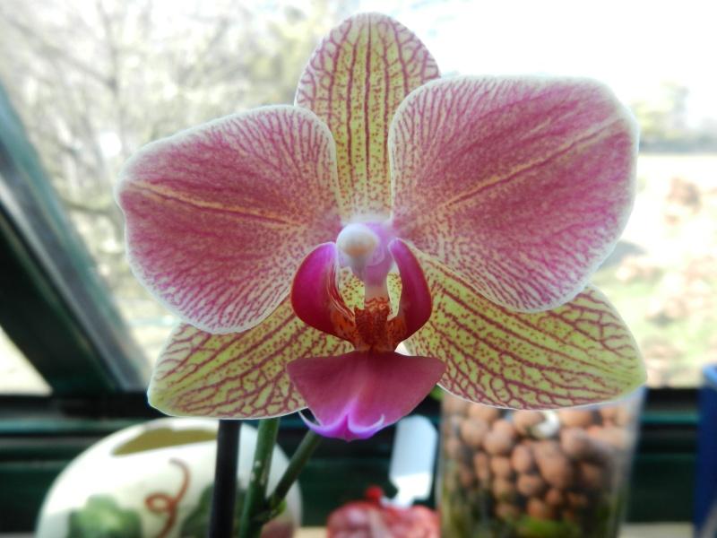 Floraisons d'intérieur  Pholae10