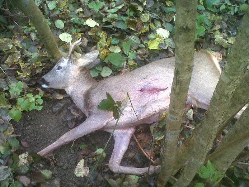 Saison de chasse au Grand Gibier 2012/2013 - Page 3 Img-2153