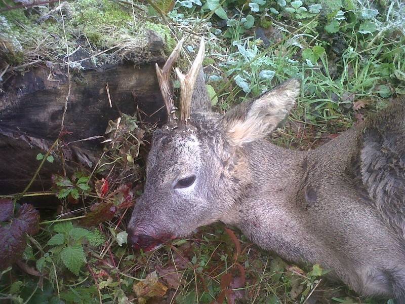 Saison de chasse au Grand Gibier 2012/2013 - Page 3 Img-2154