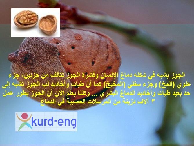 صيدلية الطبيعة سبحان الخالق Sshot-24