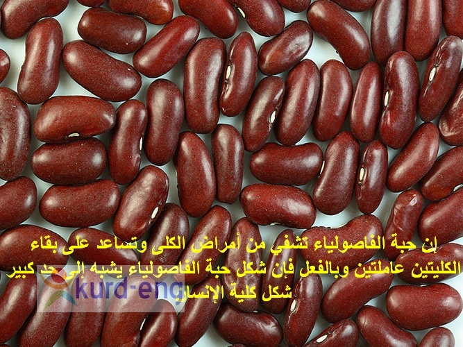 صيدلية الطبيعة سبحان الخالق Sshot-29