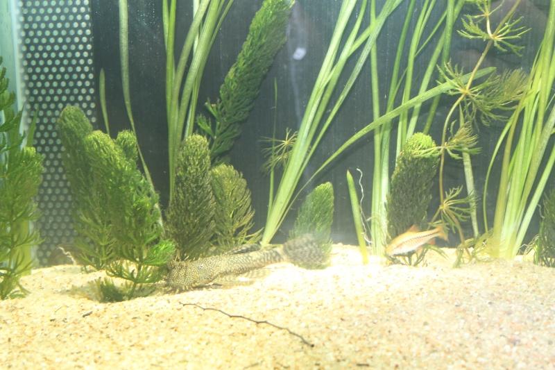 Nouvel aquarium 450 litres - Page 2 Img_0118