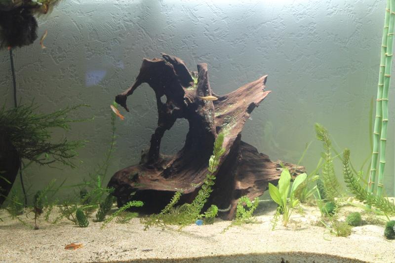 Nouvel aquarium 450 litres - Page 2 Img_0210