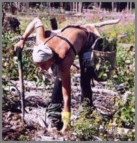 Jobangebot: Baumpflanzer für 500.- Euro pro Tag Baumpf10