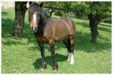 Equotherapie - das Pferd ist der Therapeut Flitzi10