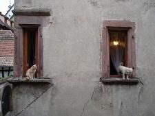 Tiere als Hausmeister Wolfga10