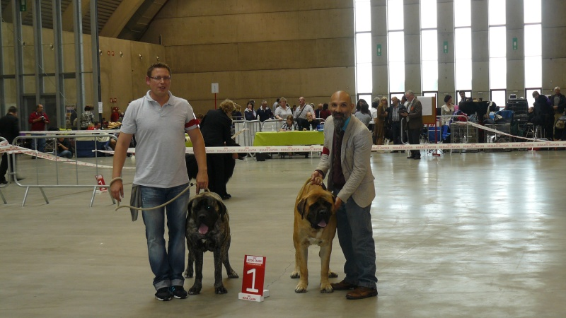 dog show lotto mons expo 28/08/2011 Expo_m10
