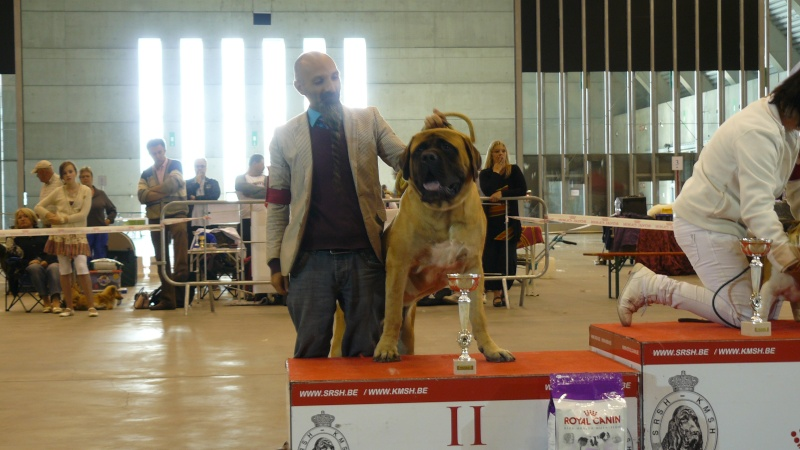 dog show lotto mons expo 28/08/2011 Expo_m11