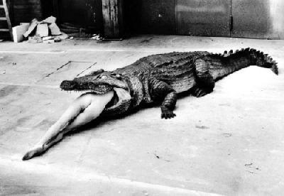Photos de mon dernier revo .............. Crocod10